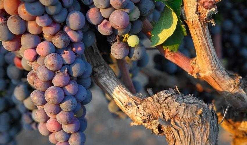 I grandi vini rossi del Salento